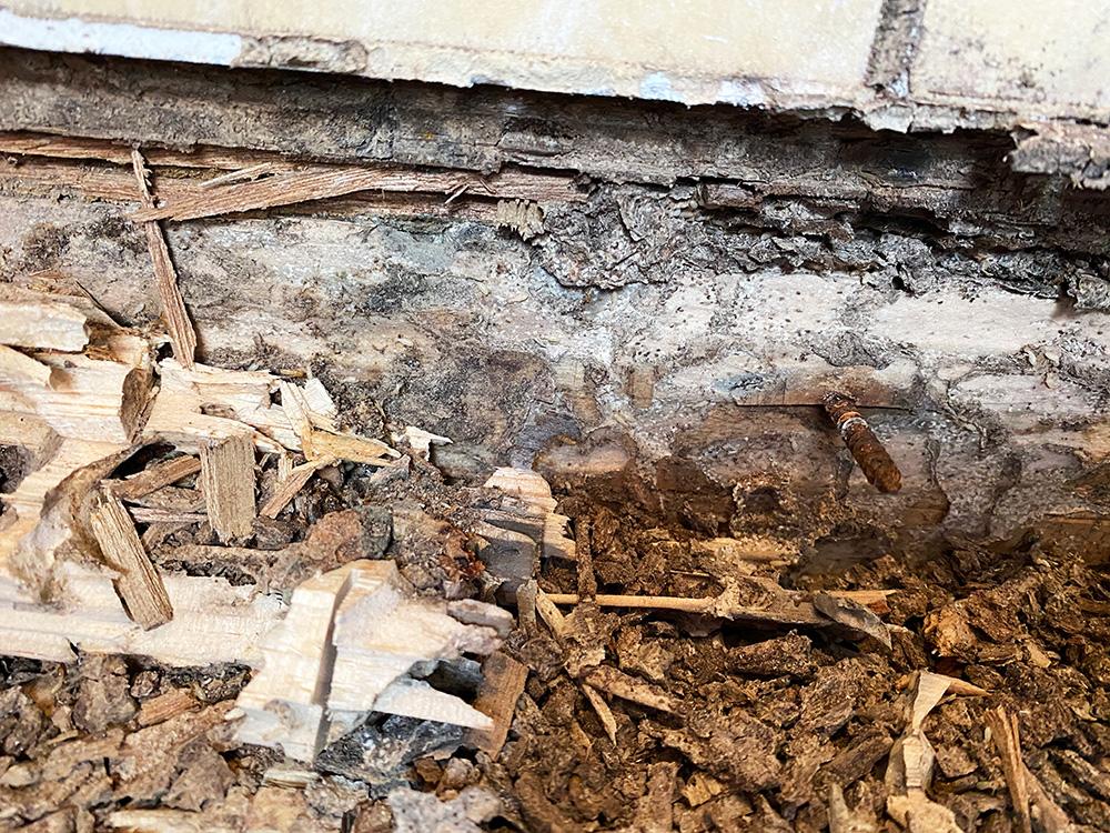 シロアリが湿気も運ぶため、木もカビて、釘も錆びています